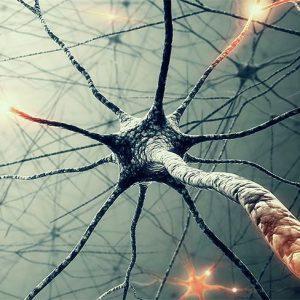 Нейромедиаторная система