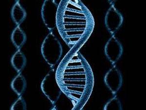 Генетики смогут предсказывать будущее алкоголикам и наркоманам